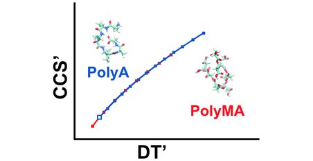 The study focues on two calibrant series, polyalanine and polymalic acid. Credit: Forsythe et al. 2015