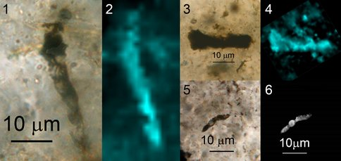 Figure 1-6. Optical photomicrographs (1, 3, 5), Raman kerogen two-dimensional images (2, 4), and a confocal laser scanning micrograph (6) of representative specimens of the 20 Apex fossils that have been prepared for SIMS analysis: 1, 2, Primaevifilum amoenum; 3, 4, Archaeoscillatoriopsis disciformis ; 5, 6, P. minutum.