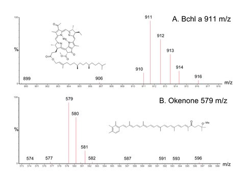 The Detection of Okenone, a Molecular Signature of Purple Sulfur Bacteria