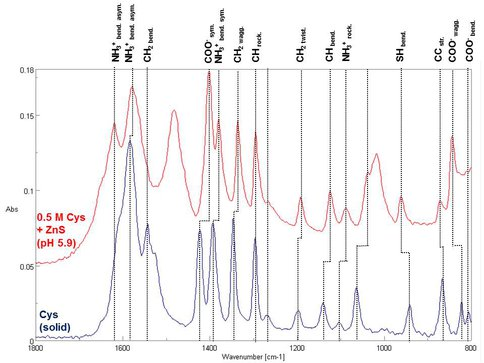 Infrared Absorption Spectra of Amino Acid (Cysteine in Solution and Interacting With ZnS Surface