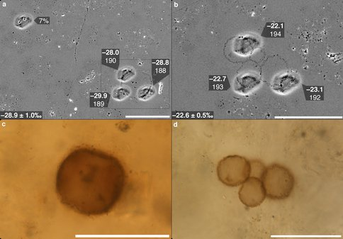 SIMS Carbon Isotope Analyses of Microfossils From the Chichkan Fm.