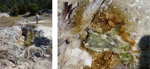Anoxygenic Phototrophic Microbial Mats at Mammoth Hot Springs, Yellowstone National Park