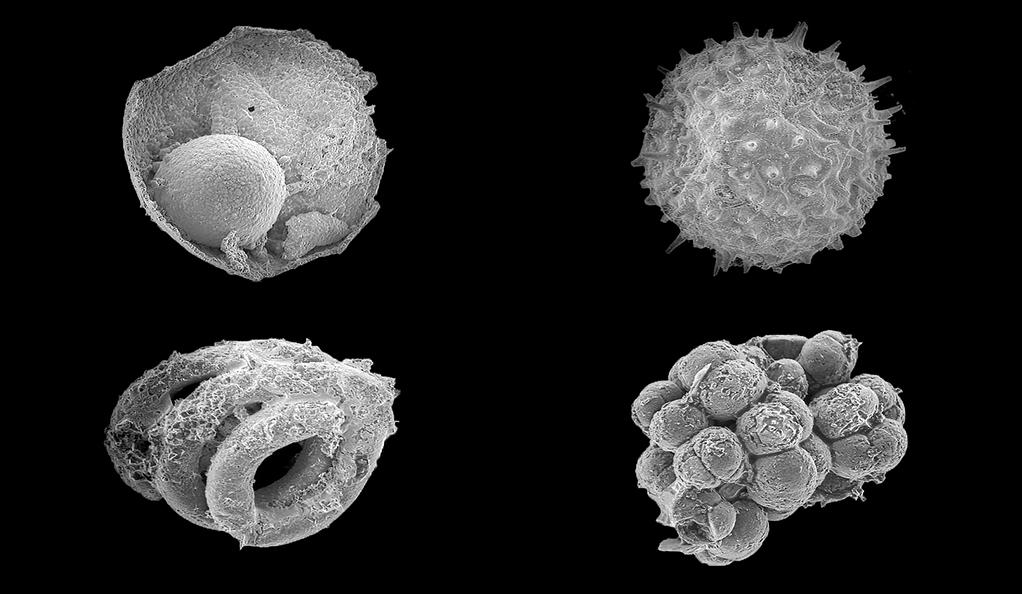 Assorted microfossils from the Ediacaran Khesen Formation, Mongolia. Each fossil is on the order of 200 microns maximum dimension. Source: Yale University Image credit: None