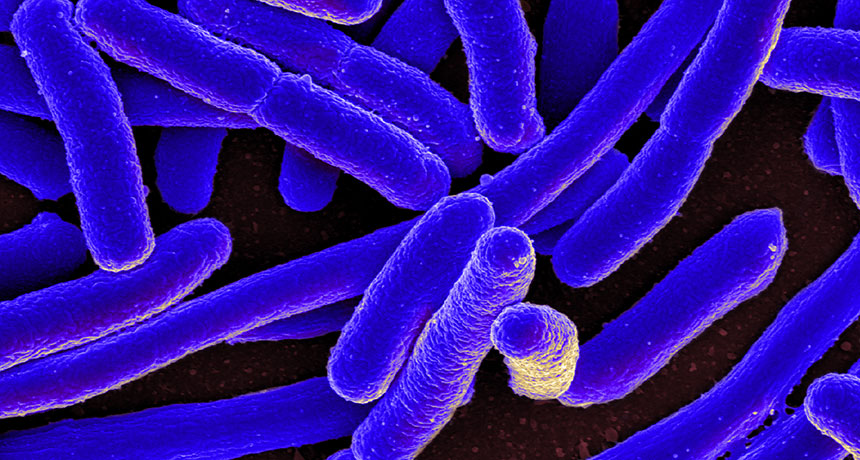 "An image of E. coli. ""Promiscuous enzymes"" fill in for missing enzymes after the bacteria is genetically altered. Source: NIAID/Flickr (Creative Commons) via Science News Image credit: None"