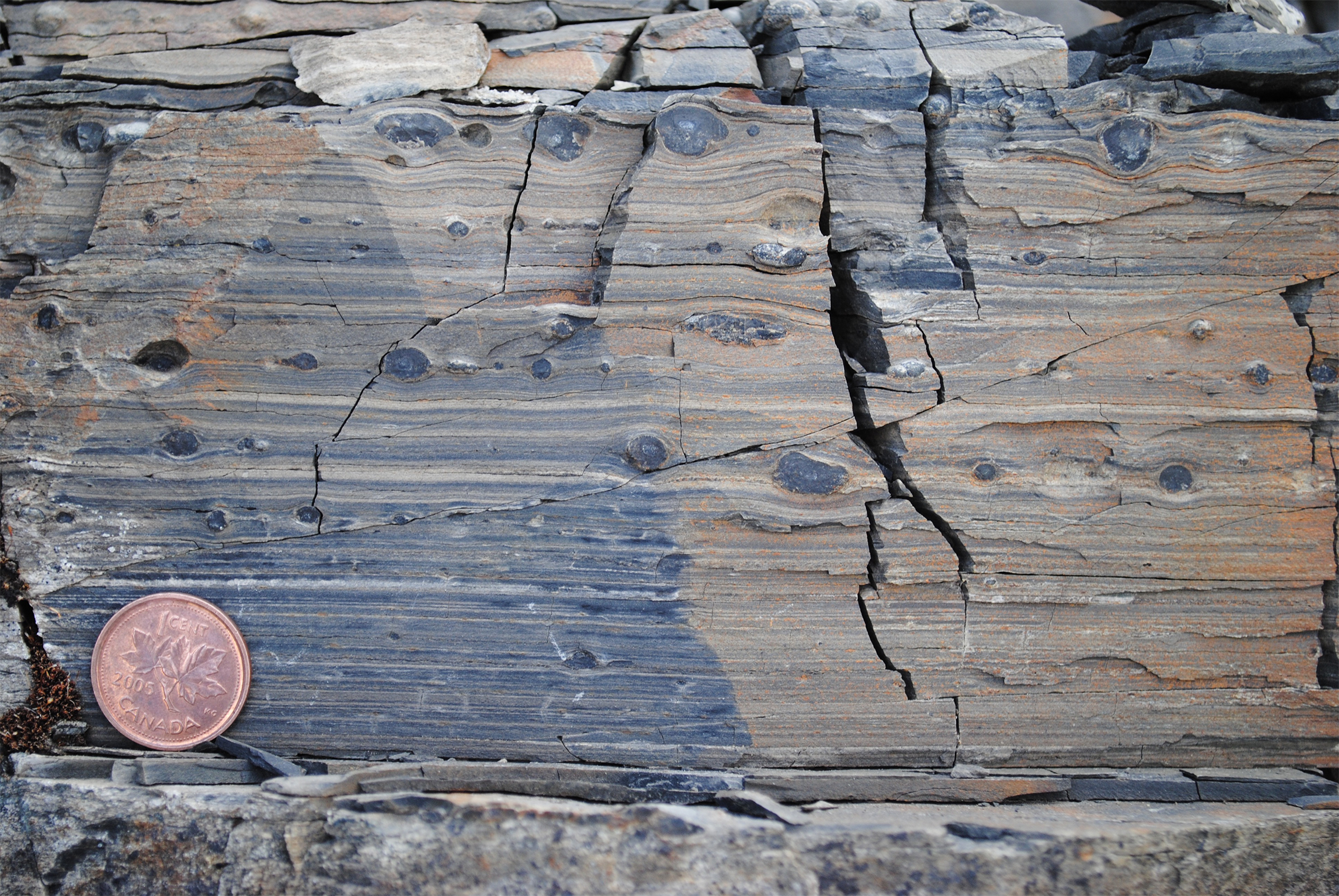 View of carbonate rocks from Mount Slipper, Yukon that contain apatitic scale microfossils. Fossils are found by dissolving the carbonate rocks in weak acid. Canadian penny for scale. Image credit: Justin V. Strauss