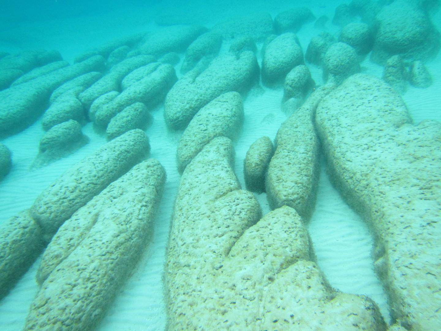 Microbial reefs called stromatolites are examples of biological structures found as far back as 3.7 billion years ago. Image credit: Pamela Reid, Ph.D., University of Miami Rosenstiel School of Marine and Atmospheric Science