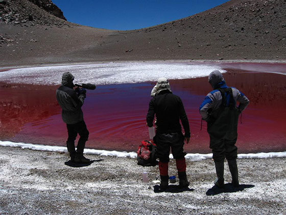 Summit of the Simba volcano (19,400 ft) – The summit crater lake is shallow and its water column completely transparent. The red color of the lake is from an algae that has developed special pigments in response to extreme levels of short wavelength (UVA and UVB) radiation. Source: SETI Institute/ NAI High Lakes Project Image credit: None