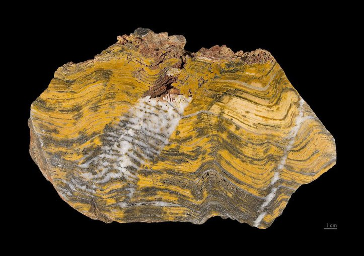 A fossil stromatolite, with clear laminations, from Strelley Pool in Western Australia.