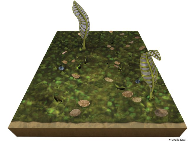 An artist interpretation of an excavated Ediacaran fossil bed measuring 50 centimeters by 100 centimeters depicts the once-common Dickinsonia and sea frond-like organisms.
