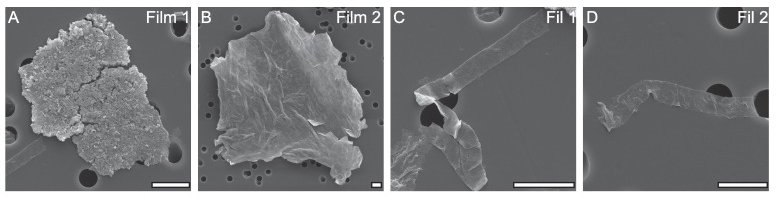 Organic-walled microfossils isolated from the early Neoproterozoic Liulaobei Formation.