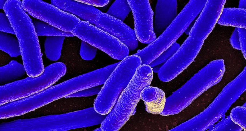 "An image of E. coli. ""Promiscuous enzymes"" fill in for missing enzymes after the bacteria is genetically altered. Source: NIAID/Flickr (Creative Commons) via Science News"