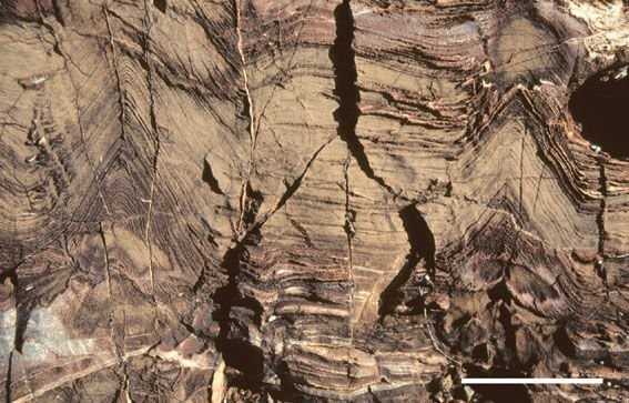 Structures in the Strelley Pool Chert rock formations in Western Australia suggest that microorganisms thrived in shallow marine environment 3.4 billion years ago.