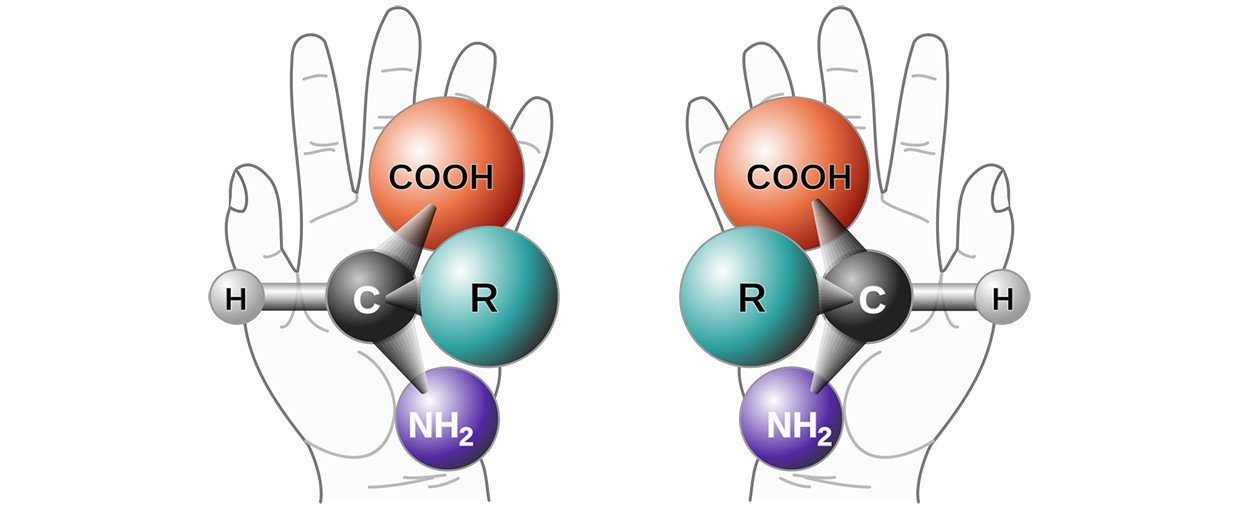Here we see a left-handed and a right-handed amino acid. The chirality of all amino ac-ids on Earth is left-handed.