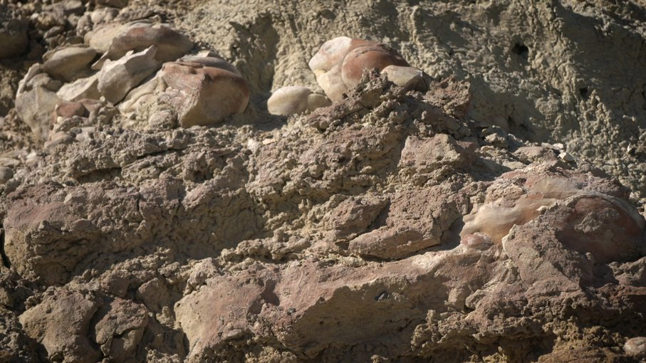 Made from fossilized microbes and sediment, these rounded rocks are stromatolites that were found in a dry lakebed during a field exercise in the Nevada desert in February 2020. The exercise was undertaken in preparation for the Mars 2020 mission.