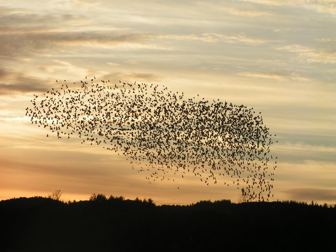 The origin of life may share certain characteristics with the self-organizing swarming behavior of birds.