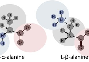 In β-alanine, the amino group (blue) is attached to the β carbon as opposed to the α carbon. The α carbon (left image) is the central carbon where both the amino (blue) and carboxylic acid (red) groups are attached.