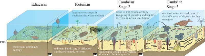 Biota from the Ediacaran period through the Cambrian explosion.
